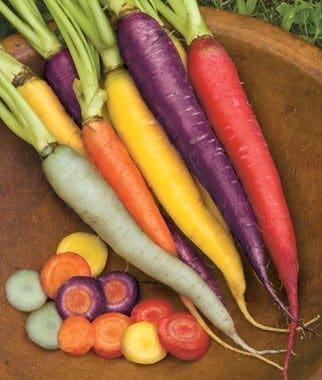 Carrot Rainbow mix