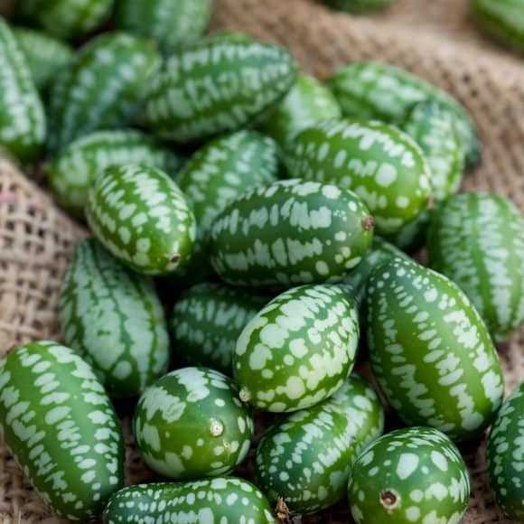 Cucamelon fruit, also known as Mexican gherkins, Mexican sour cucumbers, or Melothria Scabra on a hessian, burlap sack background