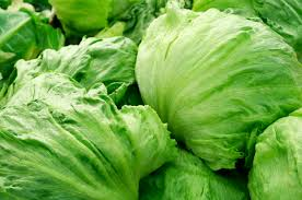 Lettuce Crisphead Iceburg