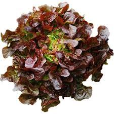 Lettuce Red Oakleaf
