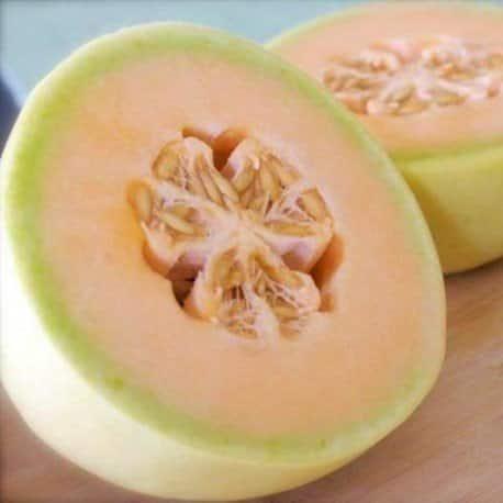 Melon Honeydew Orange Flesh - Temptation