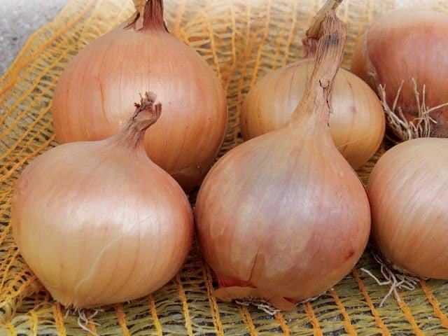 Onion Sturron